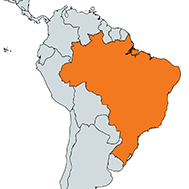 Brazil mj